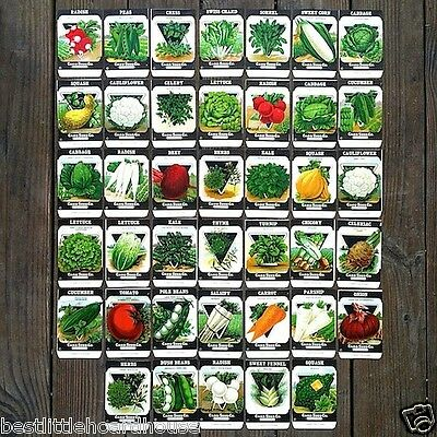 40 Original 1920s Card Seed Co VEGETABLE SEED PACK COLLECTION 1920s NOS Unused