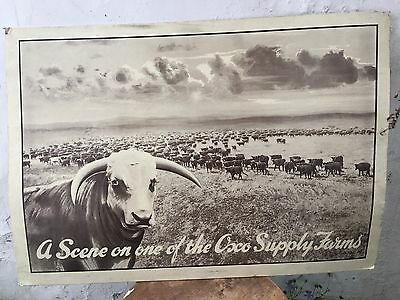 Large early 20thC OXO Advertising Sign Oxo Supply Farms 72.5 x 51cm