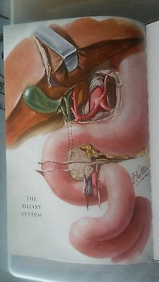 1946 Function The Biliary System Armour Laboratories Frank Netter Illustrations