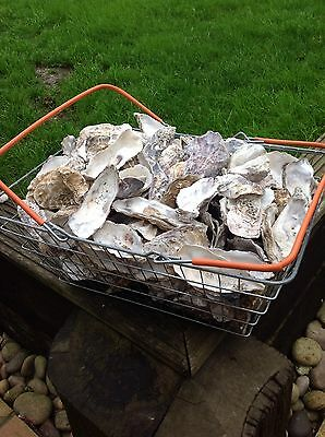 Oyster Shells Halves 2 kg Approx - Filter Media-Fish or Poultry Feed