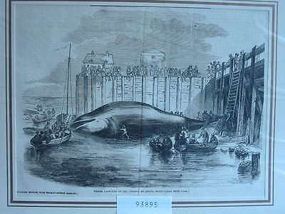 93895-Wal-Whale Thames at Grays-T Holzstich-Wood engraving