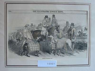 93901-Zoologie-Zoology-Windhunde Dogs-Coursing-T Holzstich-Wood engraving
