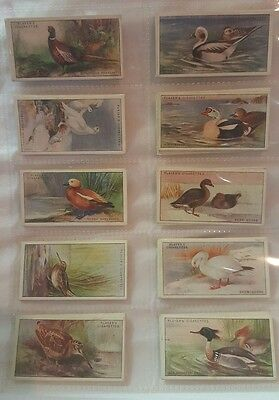 1927 Complete Series Of 50 Game Birds & Wild Fowl Set Of Player's Cigarette Card