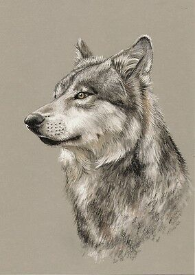WOLF    *   A4  Limited  Print   # 20