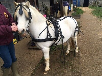 Pony Leather driving Harness