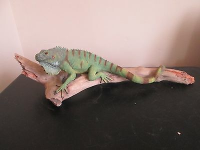 Iguana On Branch Lizard by Country Artists Natural World signed K.Sherwin