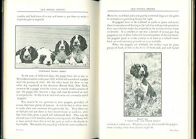 1930 Book Dogs - All Spaniels