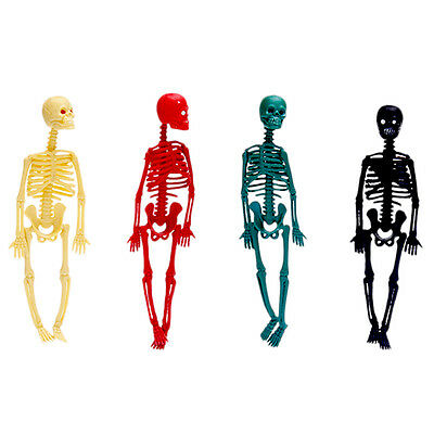 Human Body Skeleton Model Stand Poster Medical Aid Baby Kids Learn Toys
