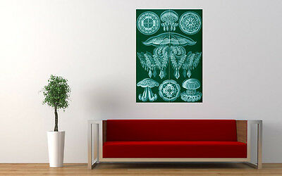 """ERNST HAECKEL DISCOMEDUSAE 4 JELLYFISH ART PRINT POSTER PICTURE WALL 33.1""""x23.4"""""""