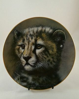 Cheetah Cub - Part of the Cubs of the Big Cats Plate Collection