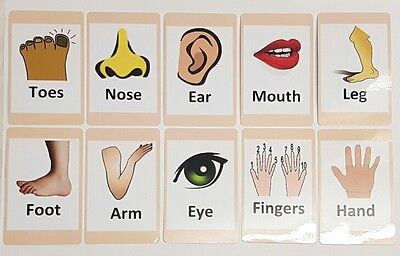 Body Parts Flash Card Set - Educational Learning Picture & Word Cards Bodyparts