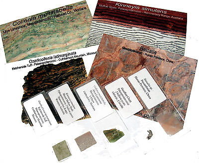 Stromatolite fossil thin section collection 5 microscope slides Collenia more #1