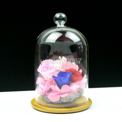 Table Display Clear Glass Cloche Bell Micro Landscape Dried Flower Vase Dome US