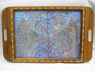 Colourful Iridescent Al Morpho Butterfly Wings Inlaid Wooden Tray