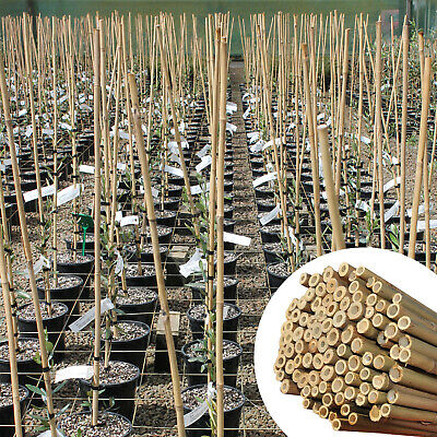 Heavy Duty 3Ft Bamboo Garden Canes 10-12Mm Thick Strong Fencing Plant Support