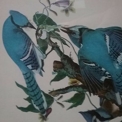 John J. Audubon's Birds of America Blue Jay and Red Tanager 19th century