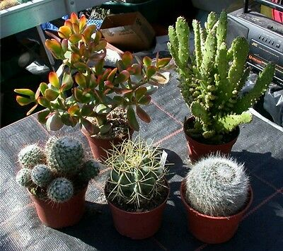 Quality Soil Cacti & Succulents Mix Drainage and Free Delivery