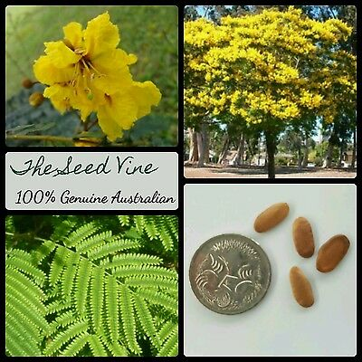 20+ YELLOW POINCIANA TREE SEEDS (Peltophorum pterocarpum) Bonsai Yellow Tropical