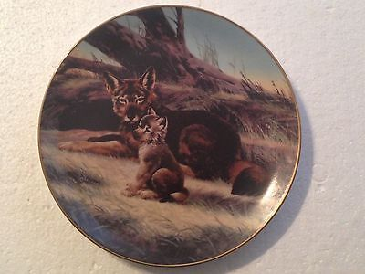 Collectable Wolf Plate 8 1/4 Inches - The Red Wolf - Bradex Collection