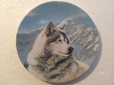 Collectable Wolf Plate 8 1/4 Inches - Solitary Watch - Bradex Collection