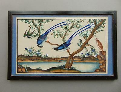 19th Century Chinese Watercolour Painting on Pith Exotic Birds