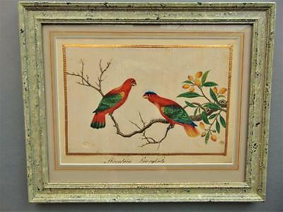 19th Century Chinese Watercolour Painting on Pith Mountain Lowrykeets / Parrots