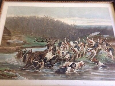 Antique Hounds Hunting Stag Framed Picture