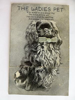 The Ladies Pet  - Old Pekingese Dog Postcard