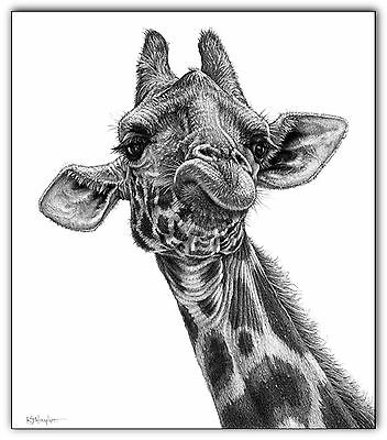giraffe print picture animal wall art poster decor b/w A3 pencil drawing sketch