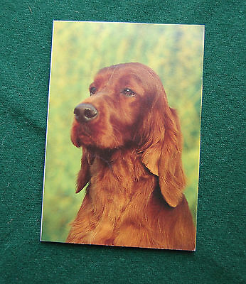 Irish Setter Postcard - Vintage - Dogs Photo - Unposted