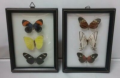 """2 Vintage 6""""x 8"""" Framed Mounted Butterfly Collections Made in Brazil Taxidermy"""
