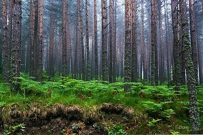 Forests for sale in Bulgaria 76005 sq. mts.
