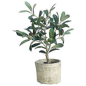 """Artificial Olive Tree in Pot 12""""H, 59925"""