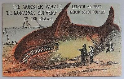 RARE! Victorian Advertising Trade Card Whale Chicago Museum Wonders of the World