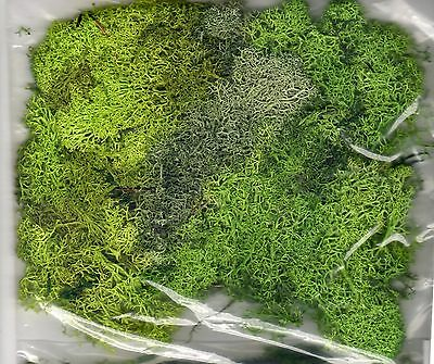 Mixed Green Lichen Moss ~ Scenery For Model Rail Ho, N & Z Scale, Brand New