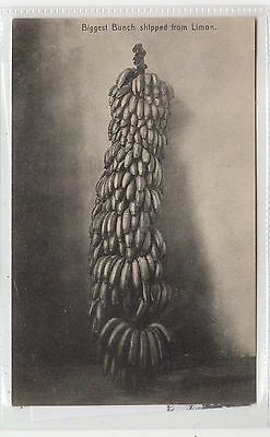 BIGGEST BUNCH OF BANANAS SHIPPED FROM LIMON: Costa Rica postcard (C26586)