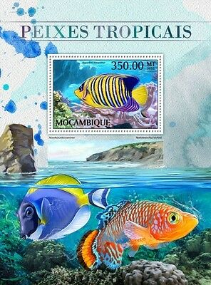 Z08 IMPERFORATED MOZ16506b MOZAMBIQUE 2016 Tropical fishes MNH Mint