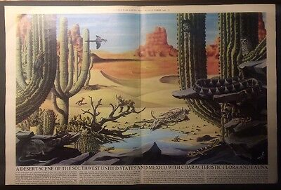 1966 A Dessert Scene Of The Southwest United States & Mexico - Flora & Fauna