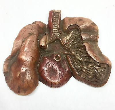 Antique Late 1800's Wax Anatomical Model Diseased Lungs & Heart Elli Buk So Cool