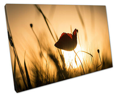 SINGLE RED Poppy Canvas Wall Art Picture Large 75 X 50 Cm - £18.99 ...