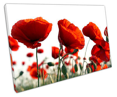 Red Poppy Canvas Wall Art Picture Large 75 X 50 Cm