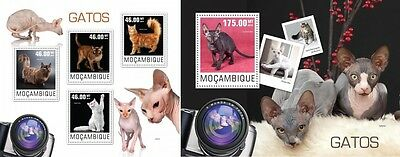 MOZ14407ab Mozambique 2014 Cats chats Katzen MNH SET