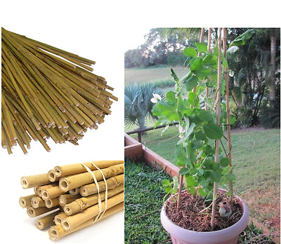 BAMBOO CANES STRONG GARDEN CANES SUPPORT PLANTS 2ft 3ft 4ft 5ft 6ft PICK QTY