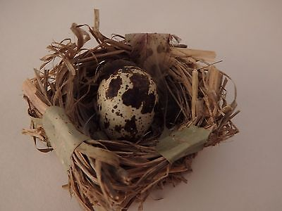 Set of three QUAIL EGG in a Nest decorative oology coturnix