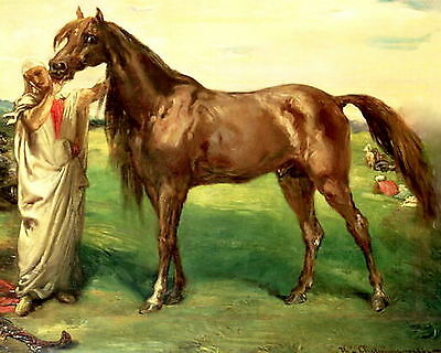 Equestrian Art Print Horse Thoroughbred Arabian Breed Stallion HADJI