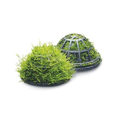 Superfish Moss Dome Holder for Aquarium Live Plant Decoration Fish Tank