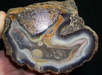 Ocl - Outstanding Mexican Moctazuma  Agate Polished Half - 2.80 Pounds