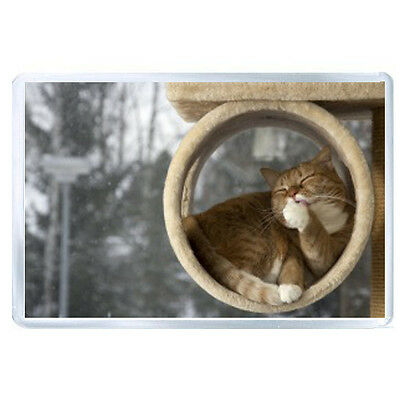 FRIDGE MAGNET cat down licking their lips rest 85802