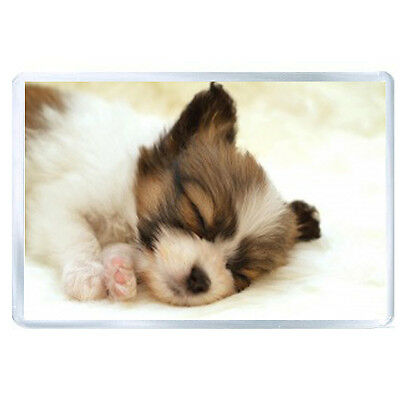 FRIDGE MAGNET puppy face sleeping spotted 52320