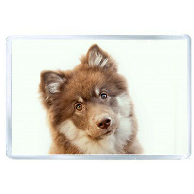 FRIDGE MAGNET puppy face spotted 40416